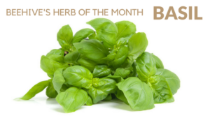 Beehive Healthcare | Massage, Chinese Massage, Liposculpture, Facial Peeling, Dermapens and Healthcare Treatments Chester | BEEHIVE'S HERB OF THE MONTH - BASIL