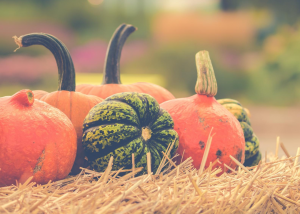 Beehive Healthcare Chester | Health and Wellbeing Centre | Pumpkins